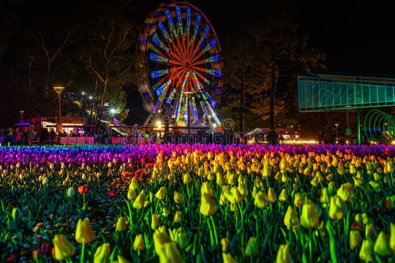 Roda e tulipas de Ferris na noite foto de stock