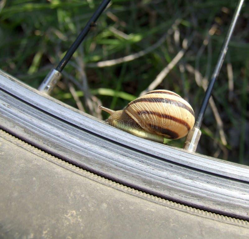 Roda romana do caracol e de bicicleta foto de stock