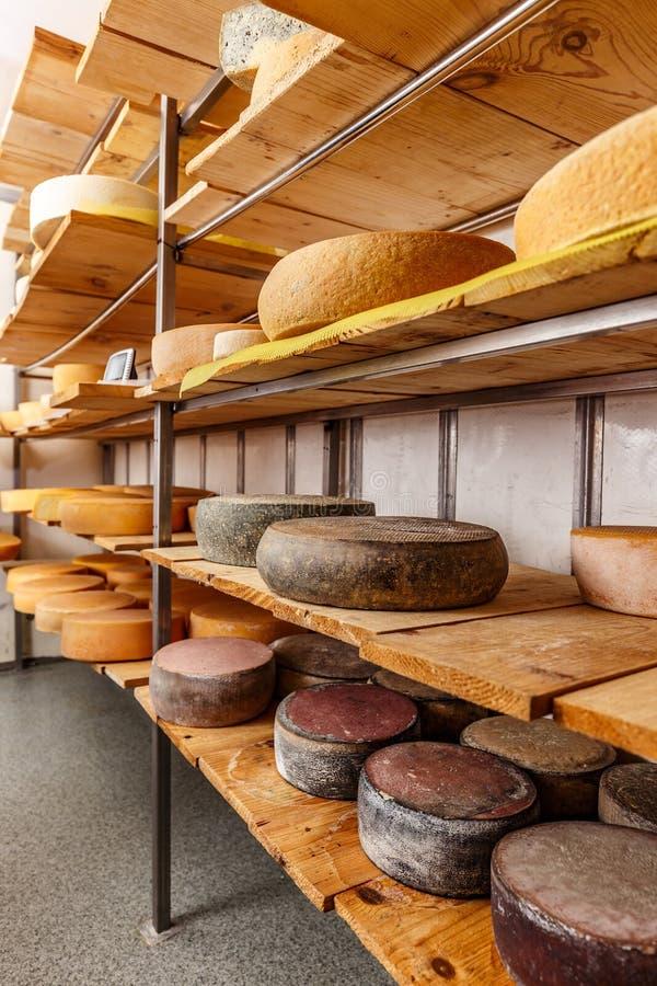 Rodas do queijo fotografia de stock royalty free