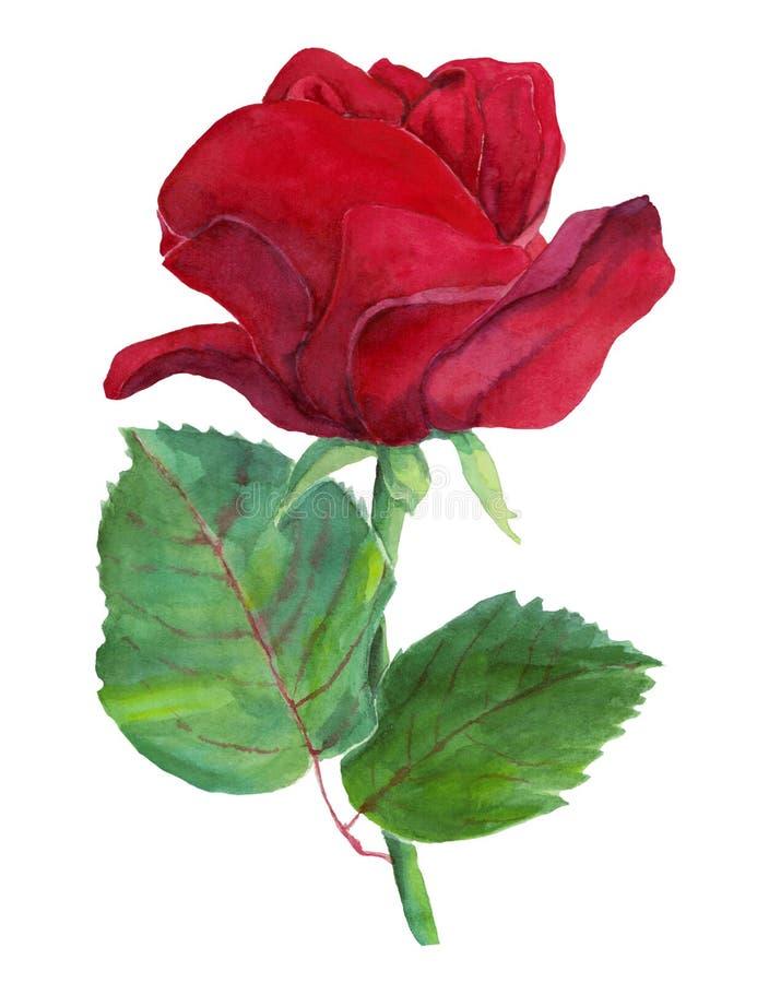 Rode één nam met bladeren toe royalty-vrije illustratie