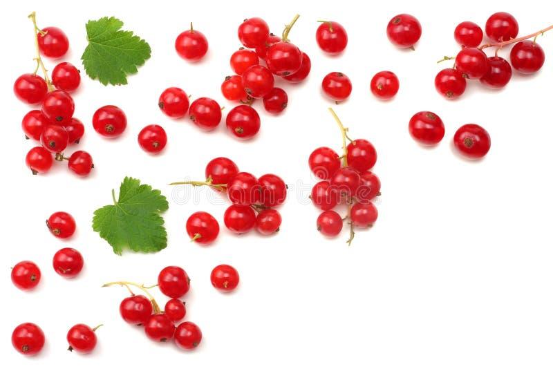 rode aalbes met groen die blad op een witte achtergrond wordt geïsoleerd Gezond voedsel Hoogste mening stock fotografie
