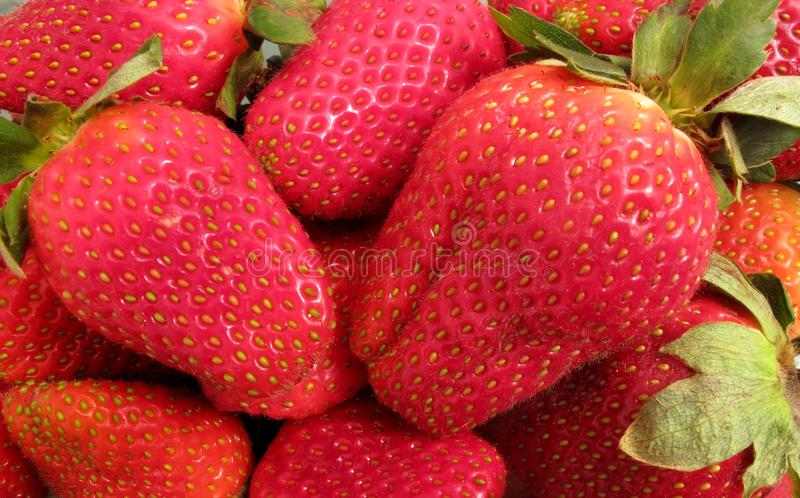 Rode Aardbeien Klaar te eten royalty-vrije stock afbeelding