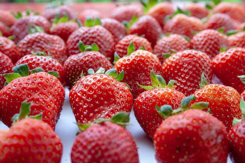 Rode aardbeien van het landbouwbedrijf stock afbeelding