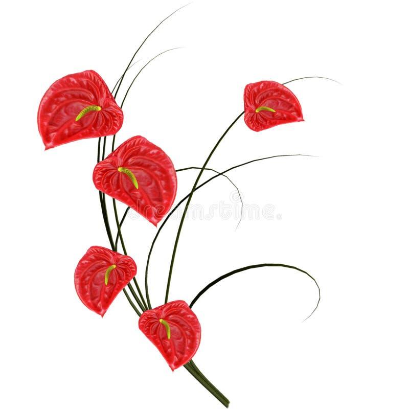 Rode anthurium. stock illustratie