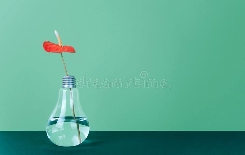 Rode Anthuriumbloem in vaas op groene achtergrond stock fotografie