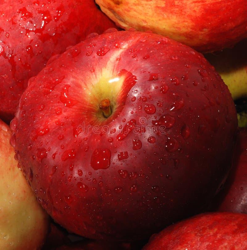 Rode Appel Gratis Stock Fotografie