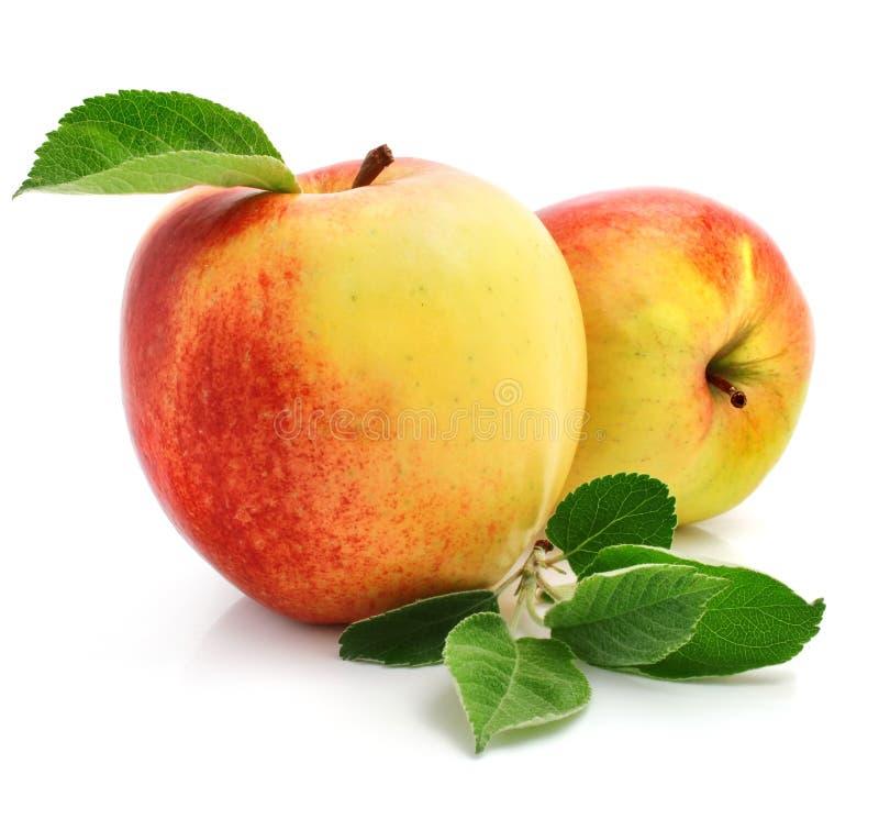 Rode appelvruchten met groene bladeren royalty-vrije stock fotografie