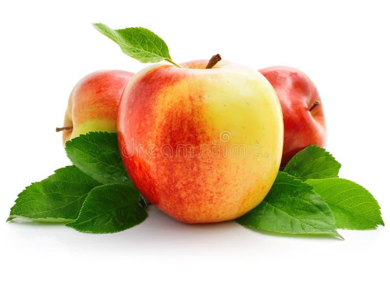 Rode appelvruchten met groene bladeren stock afbeeldingen