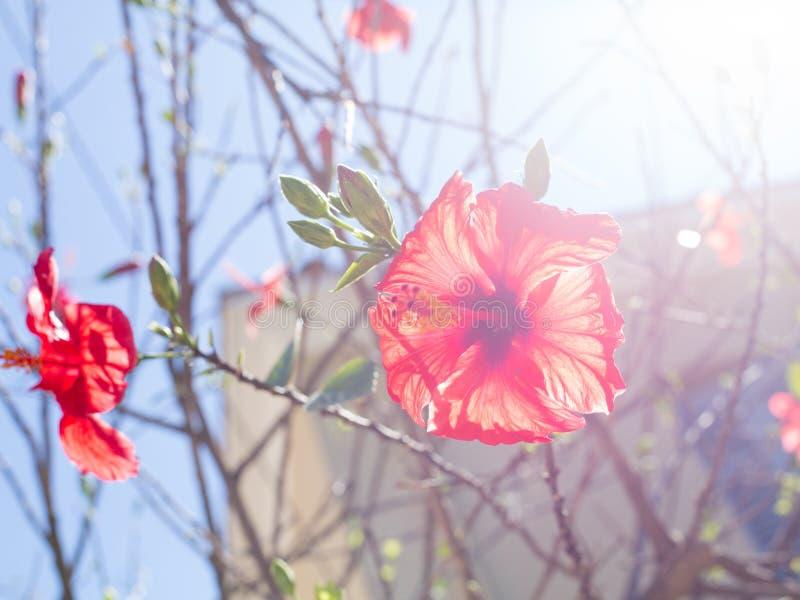 Rode backlit bloem royalty-vrije stock foto's