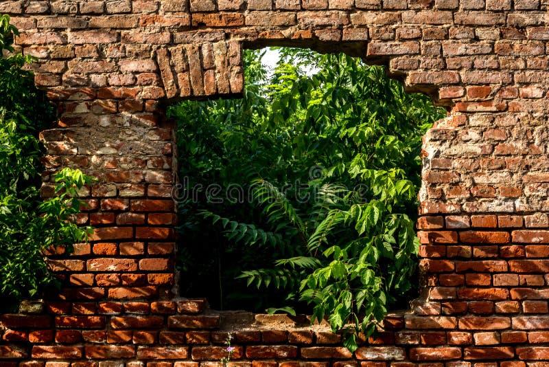 Rode bakstenen muur met oud ruïnevenster op huis en groene installaties binnen huis royalty-vrije stock afbeelding