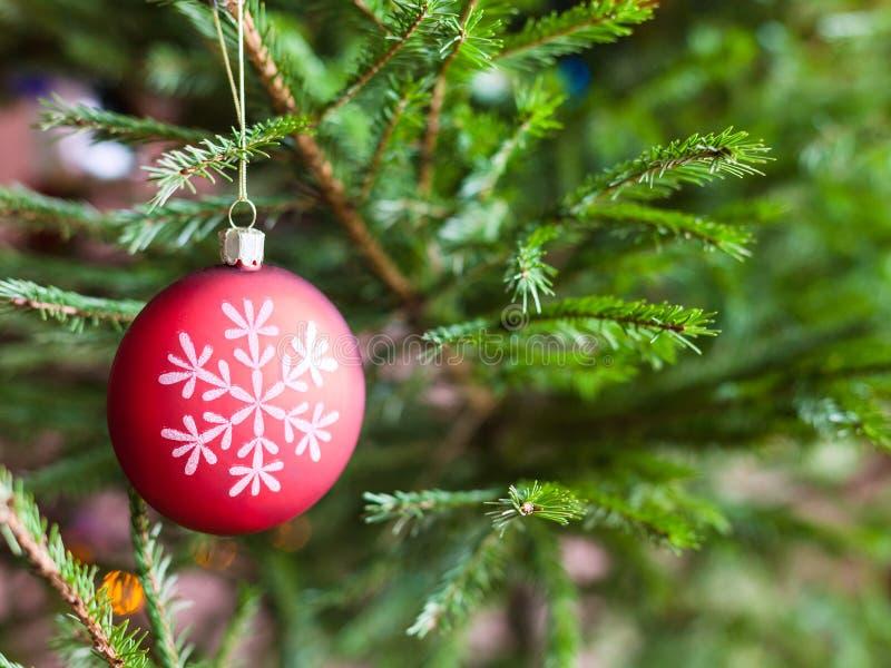 Rode bal op takjes van levende Kerstboom royalty-vrije stock fotografie