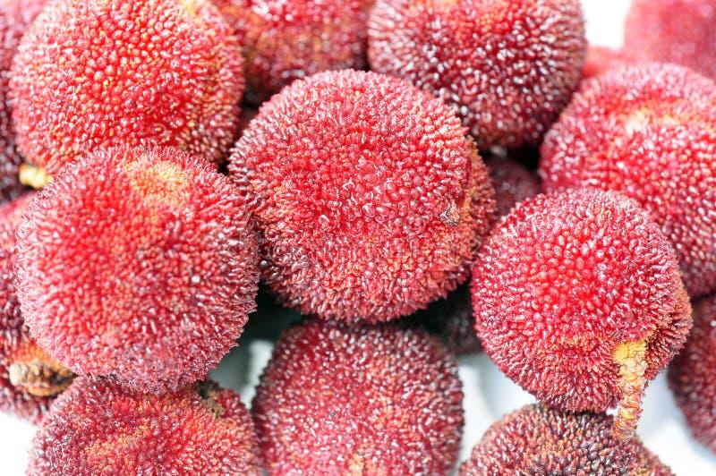 Rode bayberry vruchten stock foto's