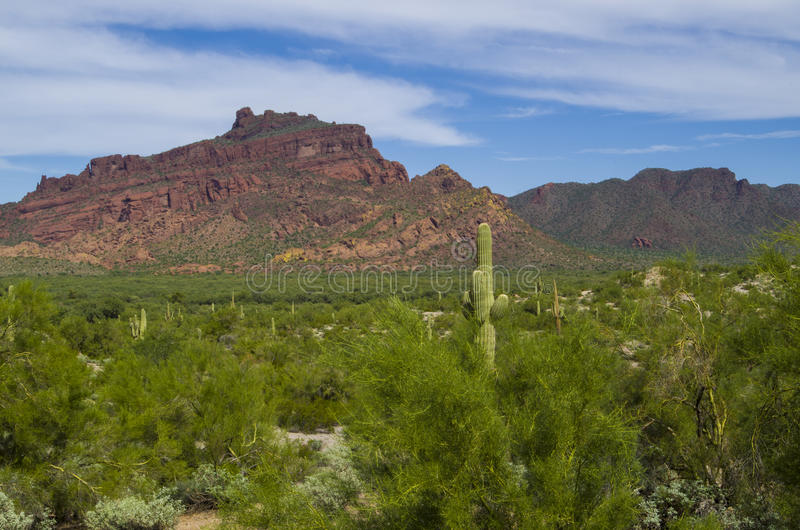 Rode Berg, groene riviervallei en saguarocactus stock fotografie