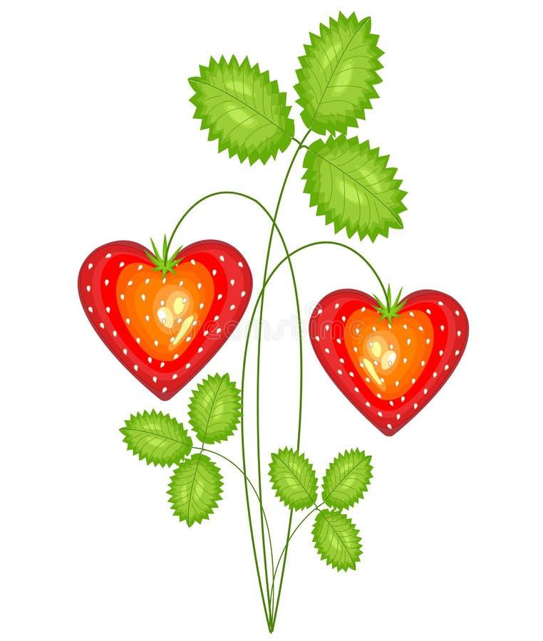 Rode bes in de vorm van hart Rijpe zoete aardbei Heden in liefde aan de Dag van Valentine s Vector illustratie vector illustratie