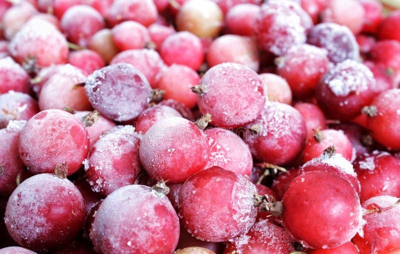 Rode bevroren die bessen met ijs en ijs, rode aalbessen worden behandeld, lingonberries, Amerikaanse veenbessen, vitaminen in de  royalty-vrije stock fotografie
