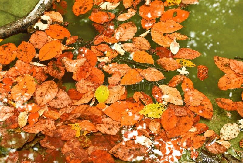 Rode bladeren royalty-vrije stock foto