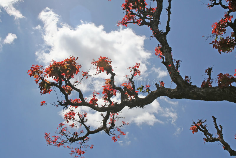 Rode bladeren in de Lente royalty-vrije stock afbeelding
