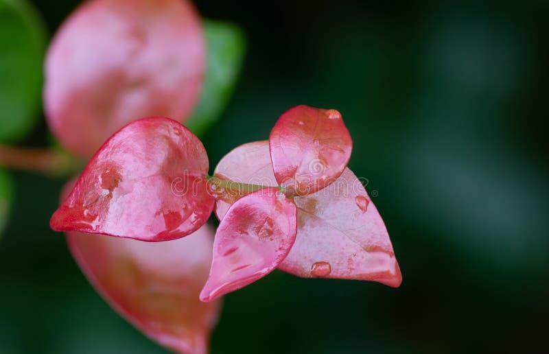 Rode bladeren in de regen royalty-vrije stock afbeelding