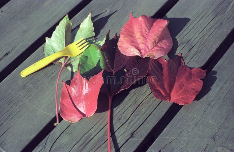 Rode bladeren en gele vork royalty-vrije stock foto