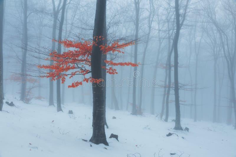 Rode bladerenboom in de winter mistig bossneeuw behandeld hout stock afbeelding