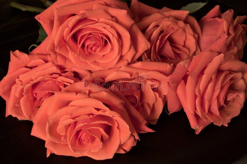 Rode bloeiende rozen op een zwart close-up als achtergrond stock fotografie