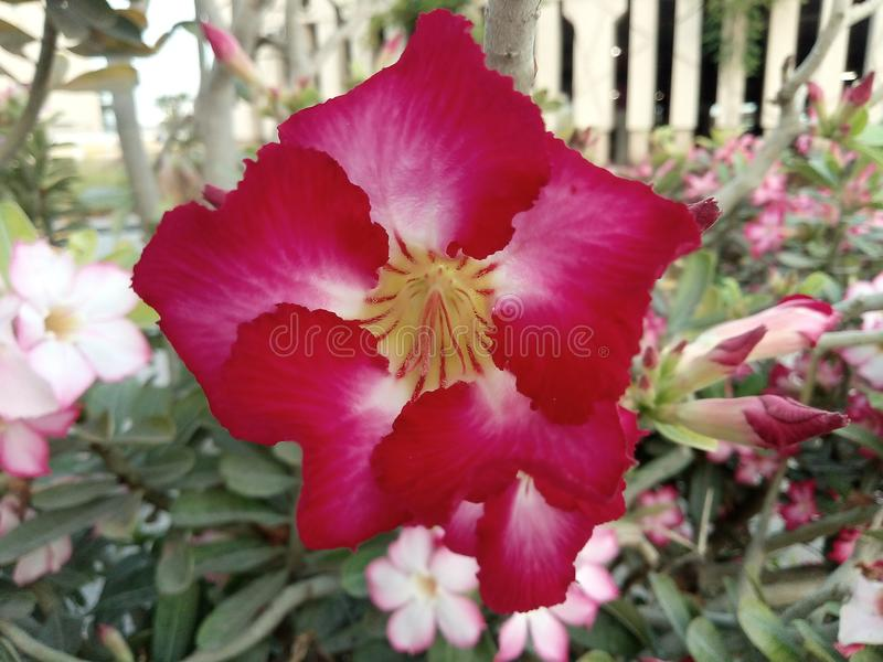 Rode bloem stock afbeelding