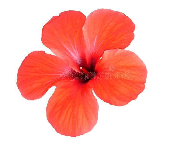 Rode bloem. stock foto