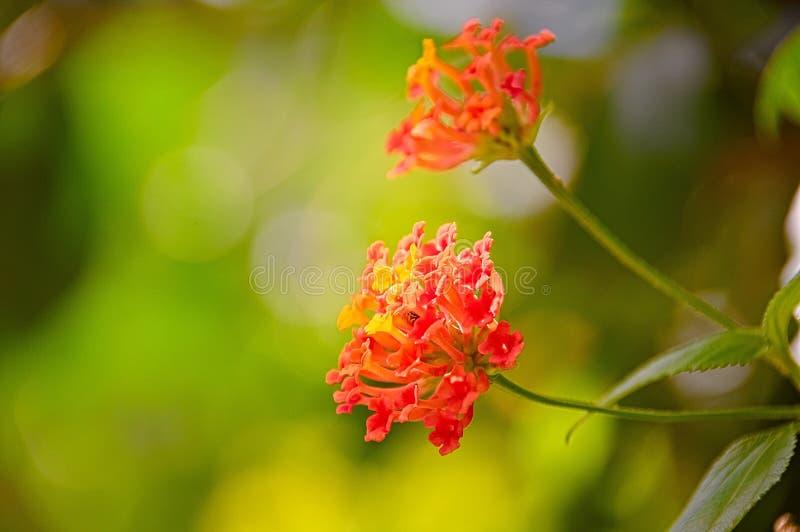 Rode bloem royalty-vrije stock fotografie