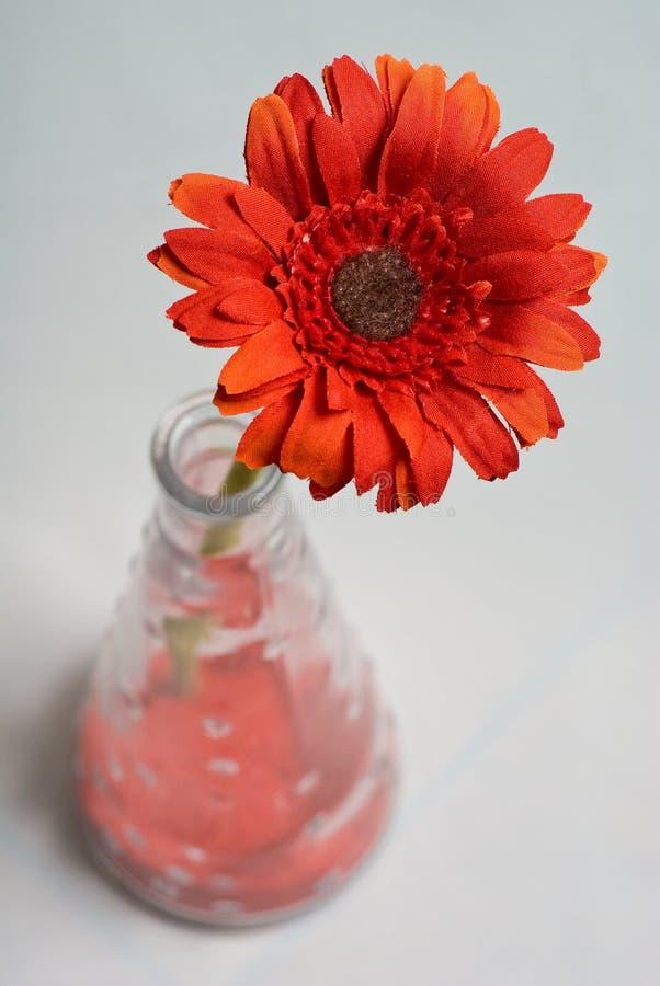 Rode bloem in bloempot op witte achtergrond stock foto
