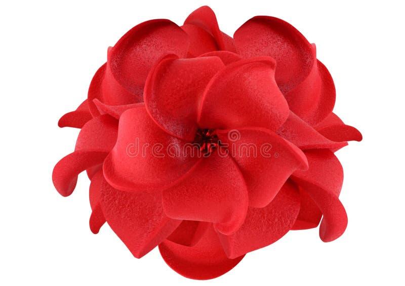 Rode bloem die op wit wordt geïsoleerde stock foto's