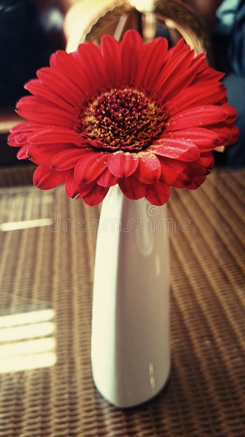 Rode bloem in dunne vaas stock foto