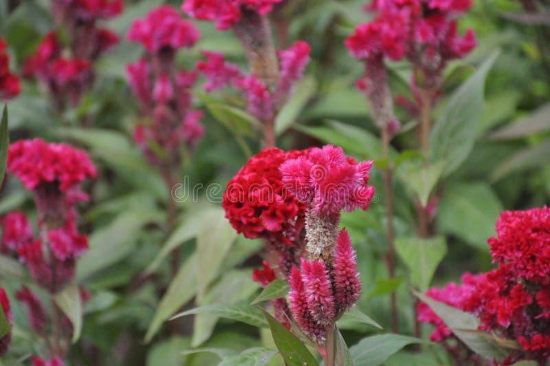 Rode bloem in het park royalty-vrije stock foto
