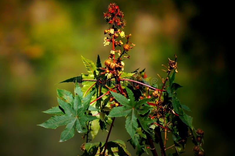 Rode bloem met hemelachtergrond stock foto