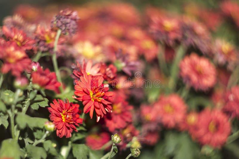 Rode Bloem met onscherp en swirly achtergrond royalty-vrije stock foto