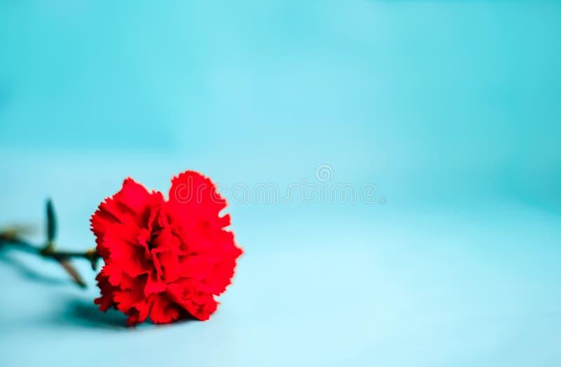 Rode bloem op blauwe achtergrond stock fotografie