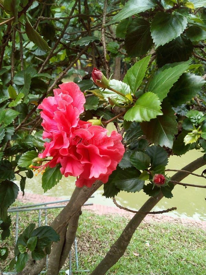 rode bloem van aard stock foto's