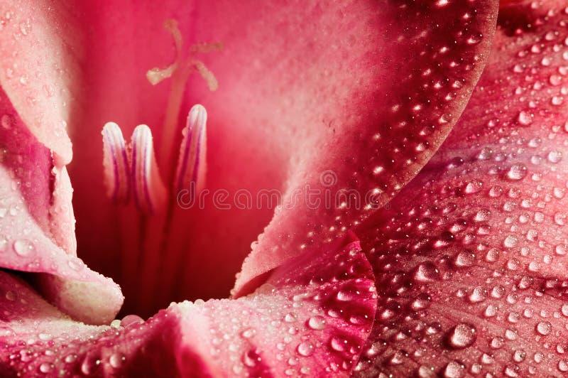 Rode bloemclose-up royalty-vrije stock afbeeldingen