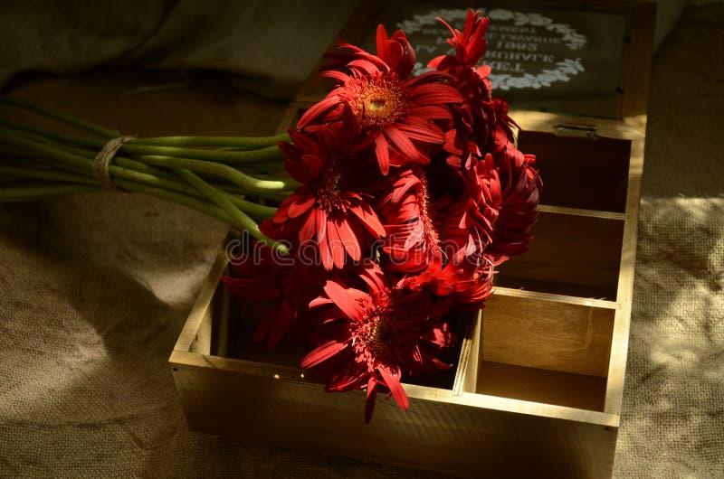 Rode Bloemen? Rode Gerbera? Gerbera, Kruidenierswinkelstijl, Nostalgie stock fotografie