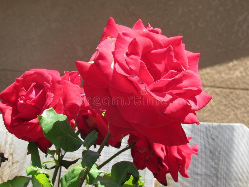 Rode bloemen royalty-vrije stock afbeeldingen