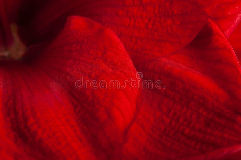 Rode bloemen, boeket stock foto