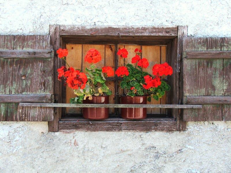 Rode Bloemen in bruin venster stock afbeeldingen
