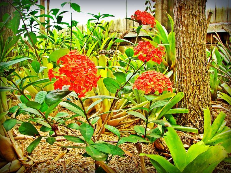 Rode bloemen in de tuin royalty-vrije stock fotografie