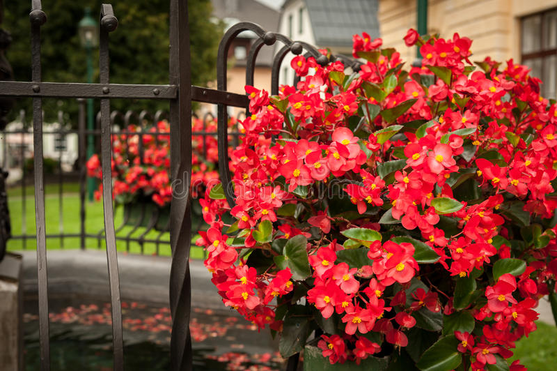 Rode bloemen die aan de kant van een fontein hangen royalty-vrije stock foto's