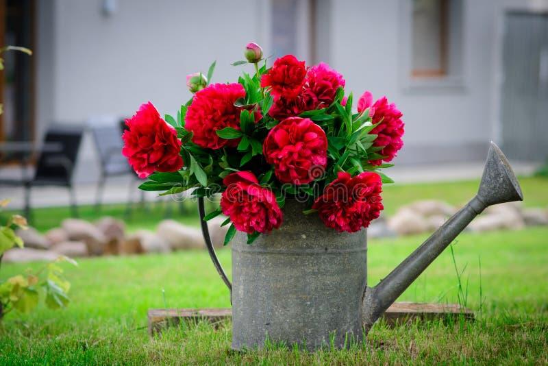 Rode bloemen in een gieter royalty-vrije stock foto's