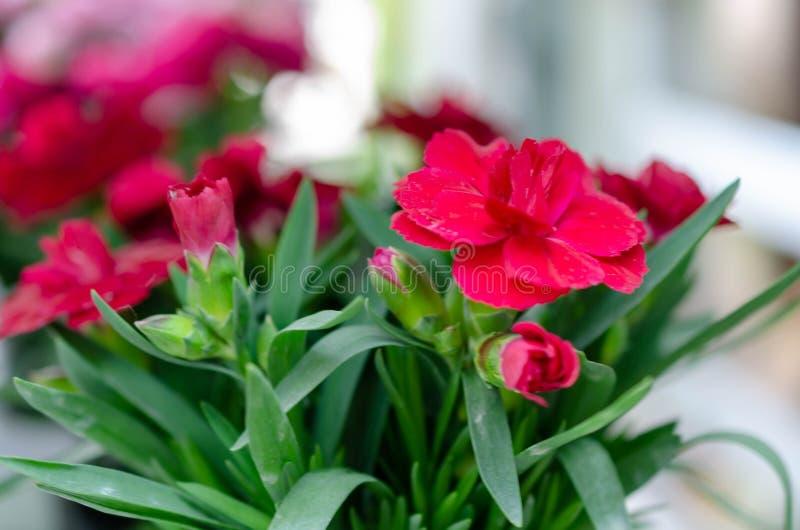 Rode bloemen en groene bladeren royalty-vrije stock foto