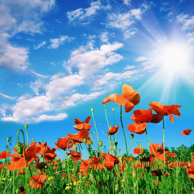 Rode bloemen en zonhemel royalty-vrije stock foto's
