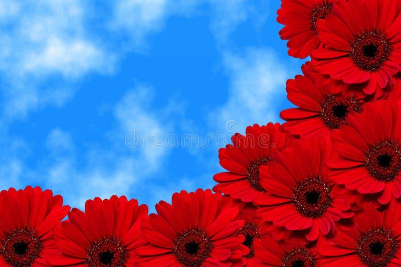 Rode bloemen Gerbera stock foto