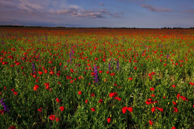 Rode bloemen, groen gras stock foto's