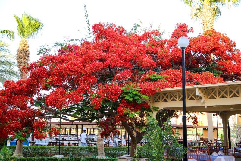 Rode bloemen op een boom stock afbeeldingen