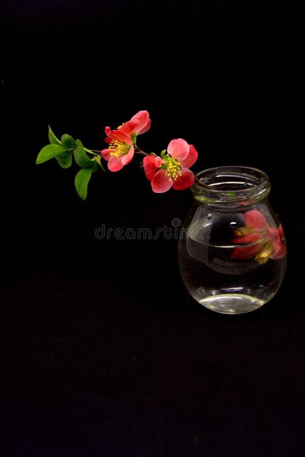 Rode bloemen op zwarte lijst stock foto